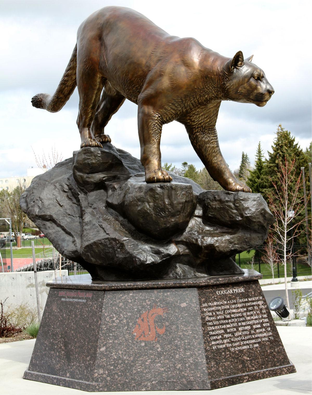 cougar pride bronze cougar mascot university sculpture monument